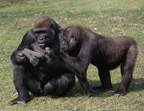 gorilla_ipad3.jpg