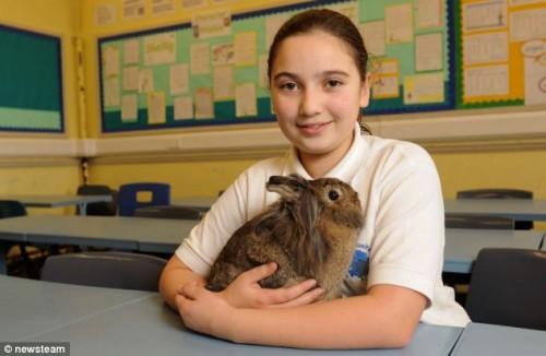 notizie animali, notizie divertenti, notizie strane, notizie commoventi, conigli, roditori, conigli testa di leone, conigli clandestini