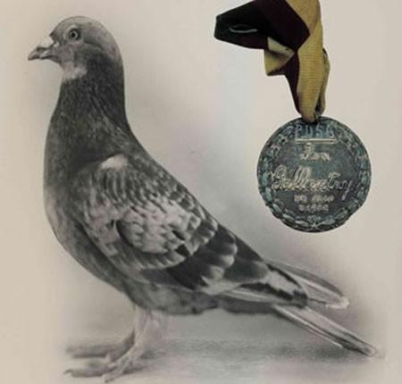 piccione_medaglia1.jpg