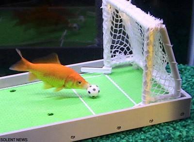 pesce_football.jpg