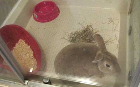 Coniglio trovato nella doccia di un albergo a Edimburgo