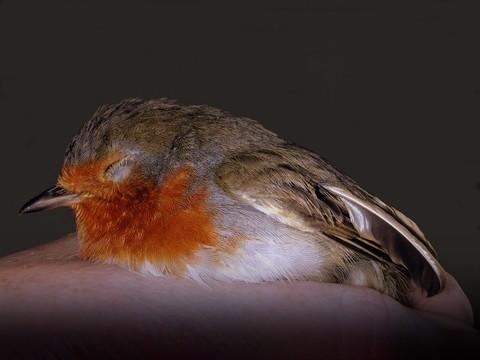 notizie animali, notizie divertenti, notizie strane, notizie commoventi, uccelli, piccioni, pettirossi, grandi magazzini
