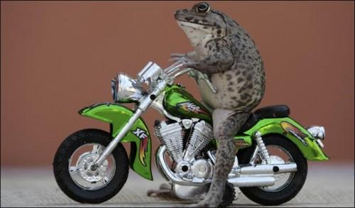 rana_motociclista.jpg