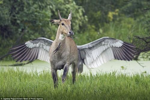 antilope_uccello1.jpg