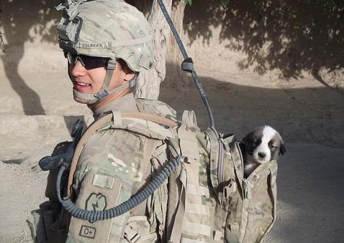 notizie animali, notizie divertenti, notizie strane, notizie commoventi, cani, cuccioli adottati, soldato adotta cucciolo, Afganistan