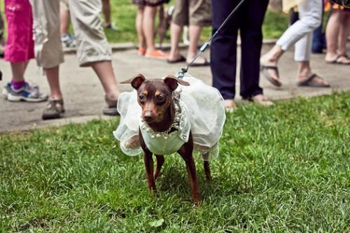 notizie animali, notizie divertenti, notizie strane, notizie commoventi, cani, Woofstock festival