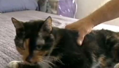 notizie animali, notizie divertenti, notizie strane, notizie commoventi,  gatti, gatti smarriti, gatti dispersi, animali smarriti, gatti ritrovati