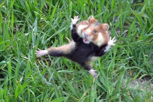 cani,kung fu,notizie animali,notizie commoventi,notizie divertenti,notizie strane,orcellini d'India,pointer ungheresi