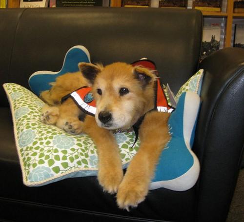 therapy-dog_baxter2.jpg
