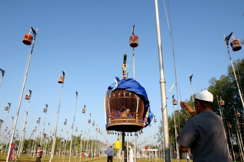 festival_uccelli2.jpg
