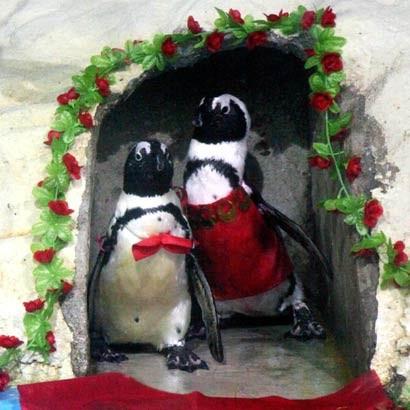 pinguini_matrimonio.jpg