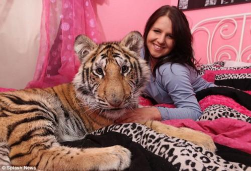 tigre_pet1.jpg