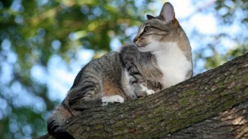 notizie animali, notizie divertenti, notizie strane, notizie commoventi, gatti, poliziotti, agenti di polizia, gatti salvati, vigili del fuoco