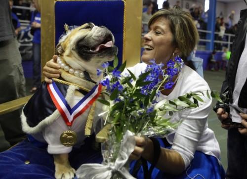bulldog_concorso1.jpg