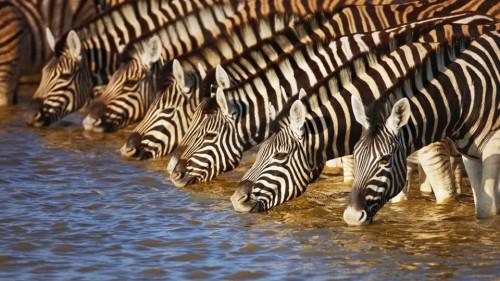 zebra_codiceabarre2.jpg