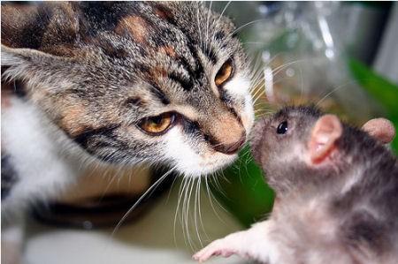 gatto_topo-amici1.jpg