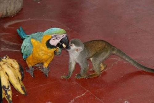 scimmia_pappagalli2.jpg
