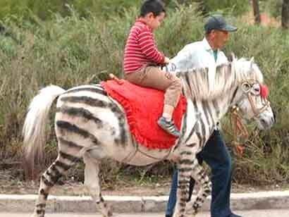 zebra_cavallo2.jpg