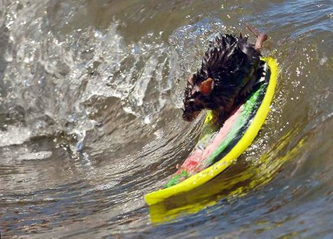 topo_surf2.jpg