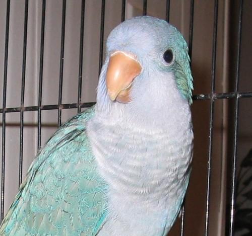 pappagallo_bambina2.jpg