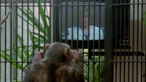 notizie animali, notizie divertenti, notizie strane, notizie commoventi, scimmie, scimpanzè, primati, scimmie e eros