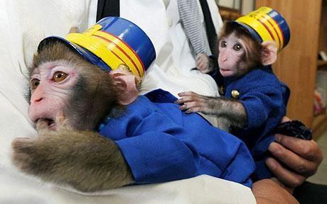 scimmie_capistazione1.jpg