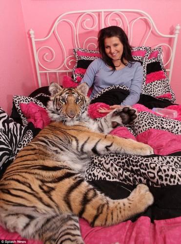 tigre_pet3.jpg