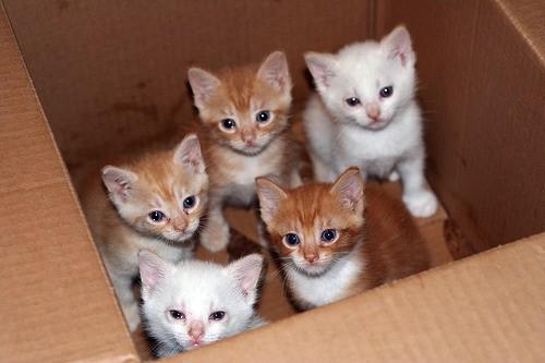 cane_catsitter2.jpg