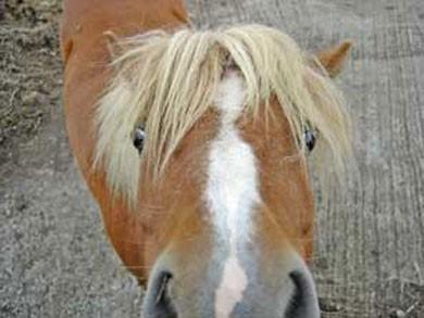pony_baci2.jpg