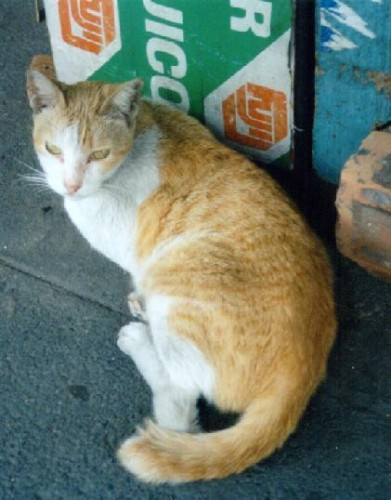 gatto_nave2.jpg