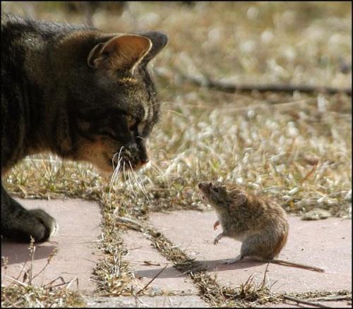 gatto_topo-amici2.jpg