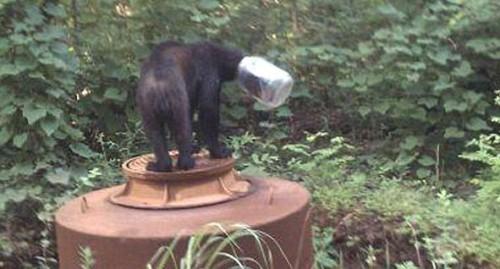 notizie animali, notizie divertenti, notizie strane, notizie commoventi, orsi, grizzly, animali intrappolati, orso incastrato