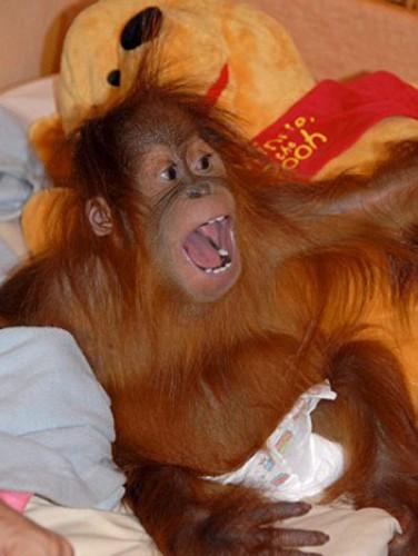 scimmia_crociera3.jpg