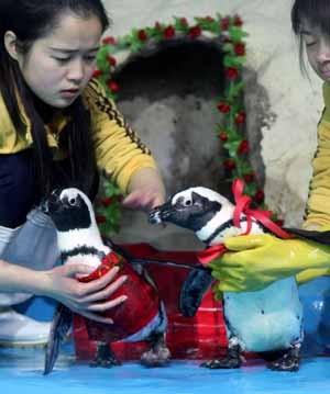 pinguini_matrimonio2.jpg