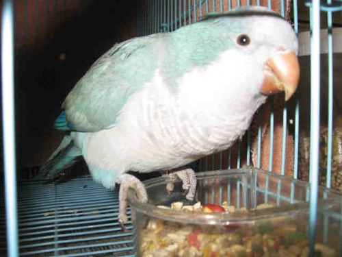pappagallo_bambina.jpg