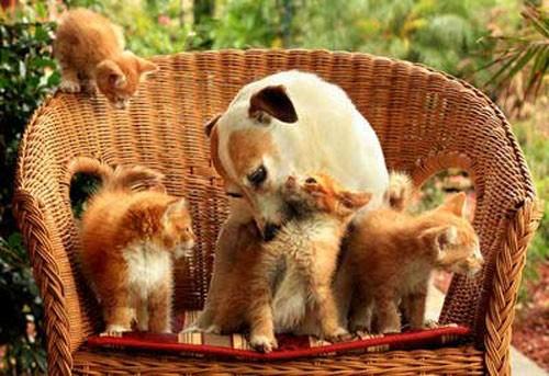 cane_catsitter1.jpg