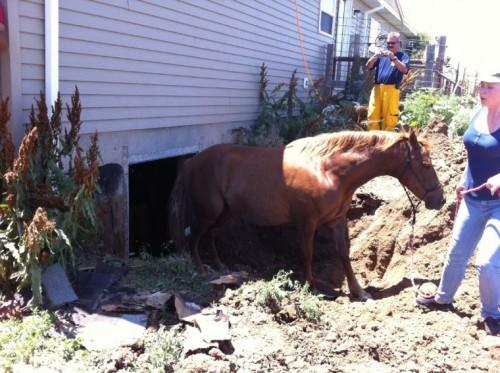 notizie animali, notizie divertenti, notizie strane, notizie commoventi, cavalli, salvataggio animali, cavallo salvato, cantina