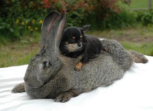 notizie animali, notizie divertenti, notizie strane, notizie commoventi, conigli, conigli giganti, conigli artritici, conigli e idroterapia, idroterapia per conigli
