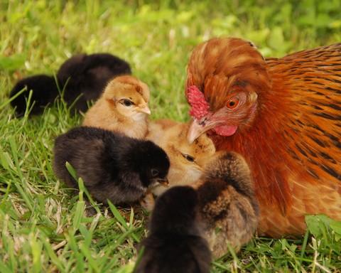 notizie animali,notizie divertenti,notizie strane,notizie commoventi,uccelli,rifugio per animali,onorificienza
