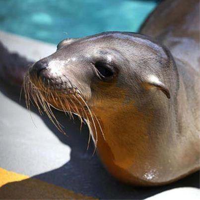 notizie animali, notizie divertenti, notizie strane, notizie commoventi, leoni marini, mammiferi marini, disco dance, disco music