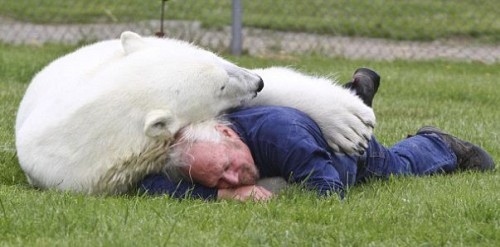 notizie animali, notizie divertenti, notizie strane, notizie commoventi, orsi polari, addestratori di orsi