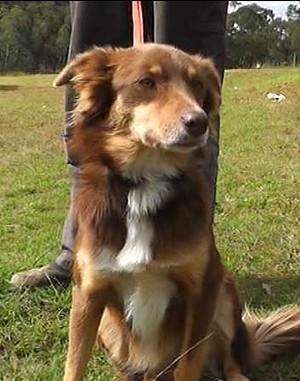 notizie animali, notizie divertenti, notizie strane, notizie commoventi, cani, incidenti automobilitici, cane salva padrone