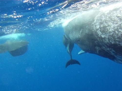 notizie animali, notizie divertenti, notizie strane, notizie commoventi, delfini, capodogli, delfini malformati, scoliosi dei delfini