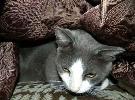 gatto_uragano2.jpg