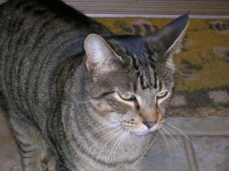 gatto_viaggio-padroni2.jpg