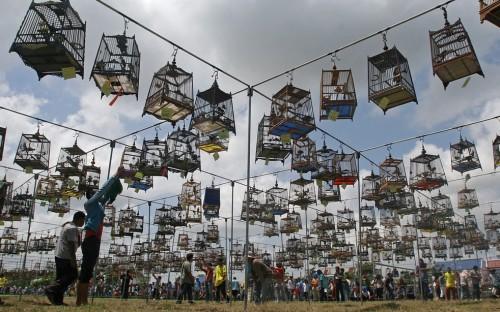 festival_uccelli1.jpg