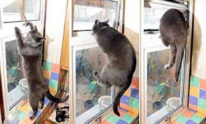 gatto_incendio2.jpg