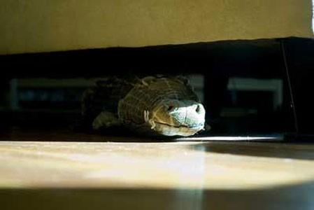 alligatore_divano1.jpg