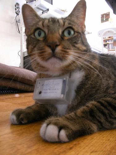 gatto_camera-spiona2.jpg