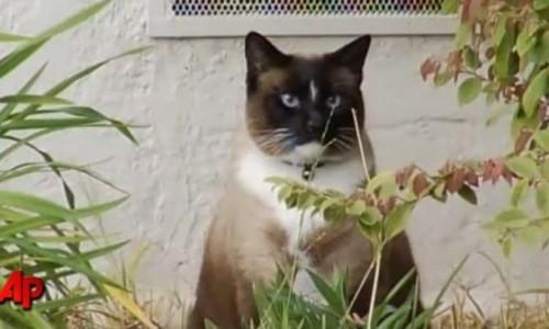 klepto_cat1.jpg
